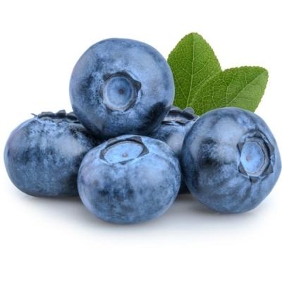 Blueberry Holland / Peru