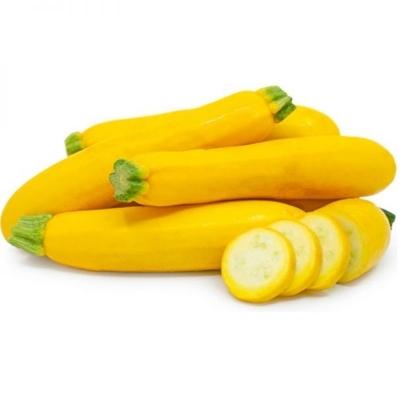 Zucchini Yellow Holland