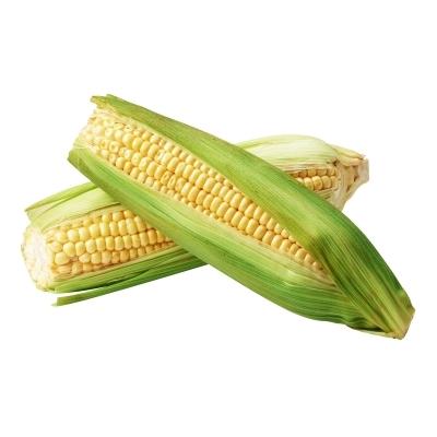 Sweet Corn Holland